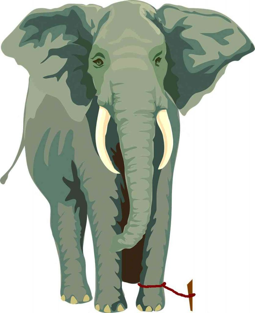 Limiting belief of the elephant